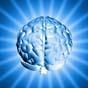 В мозге человека обнаружили сто ранее неизвестных областей