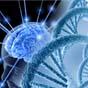 Гены миног дадут человеку возможность восстанавливать спинной мозг