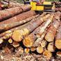В Житомире таможенники задержали на границе 32 кубометра нелегальной древесины