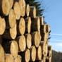 Рада может криминализировать контрабанду леса-кругляка