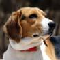 С сегодняшнего дня изменены правила перевозки домашних животных за границу