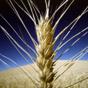 Украина установила новый рекорд по экспорту зерновых