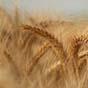 Налог на доход от аренды сельхозземель: что предлагают в ВР