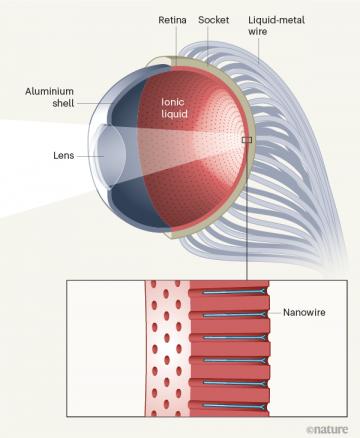 В Китае разработали бионический глаз, который может видеть в темноте