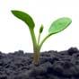 Правительство расширило финансовую поддержку аграриев