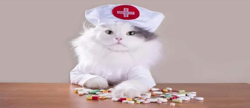 Ветеринарный препарат левомицетин по выгодной цене